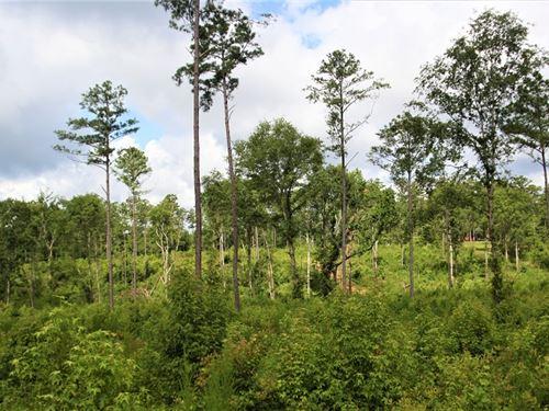 Affordable Homesite/ Hunting Tract : Gray : Jones County : Georgia