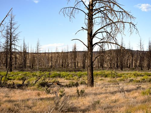 Fire Sale In Klamath County, Or : Bonanza : Klamath County : Oregon