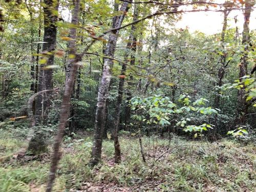 Beautiful Land With Timber & Creek : Woodville : Wilkinson County : Mississippi