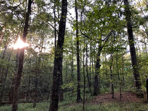 Beautiful Timber Land With Creek : Woodville : Wilkinson County : Mississippi