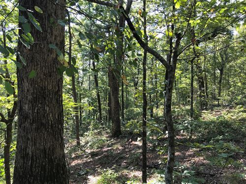 Arkansas Hunting/Recreational Land : Leslie : Searcy County : Arkansas