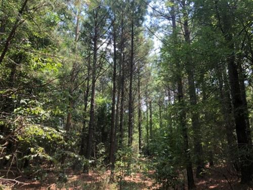 162 Acres In Lafayette County In Ab : Abbeville : Lafayette County : Mississippi