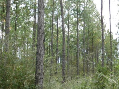 2735 Acres In Stone County In Wiggi : Wiggins : Stone County : Mississippi