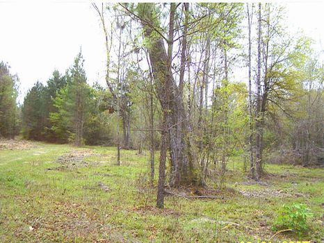 322+ Acre Hunting Tract : Sylvania : Screven County : Georgia