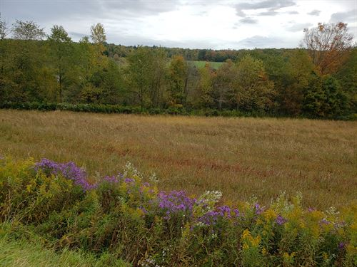 Excellent Hunting Property : Lisle : Broome County : New York