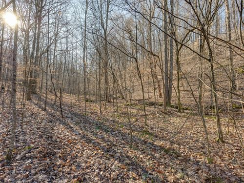 Prime Hunting Land Lynnville : Lynnville : Giles County : Tennessee