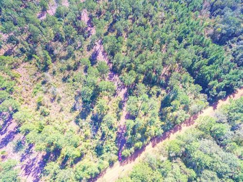 Hunting Land For Sale In East Texas : Palestine : Anderson County : Texas