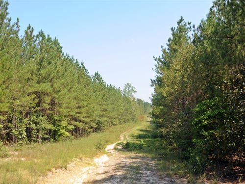 Marlboro County Sc Home & Acreage : Wallace : Marlboro County : South Carolina