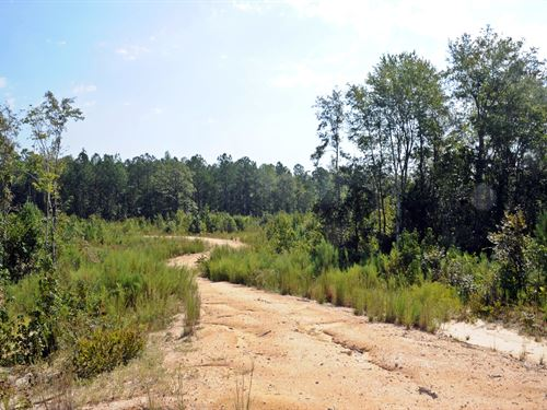 Affordable Land Marlboro County Sc : Wallace : Marlboro County : South Carolina