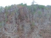 Off Grid Property With Large Lake : Oak Level : Cleburne County : Alabama