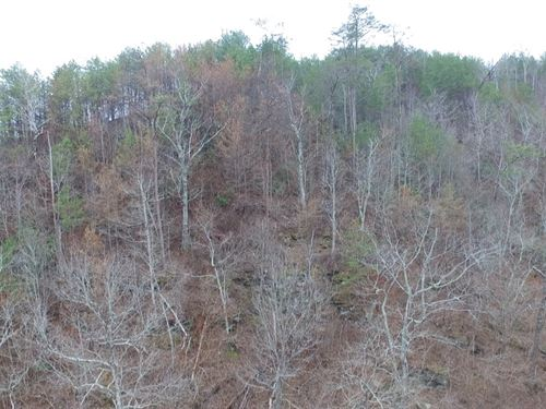 Off Grid Property With Large Lake : Oak Level : Cleburne County : Alabama