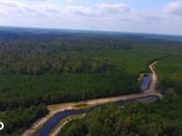 White Lake Twin Ponds : White Lake : Bladen County : North Carolina