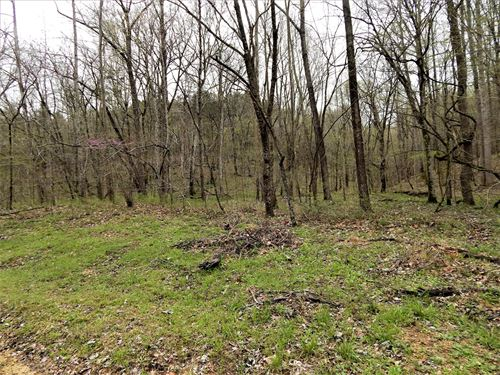 Hunting Land For Sale in TN : Clifton : Wayne County : Tennessee