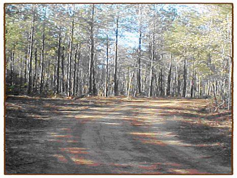 326 Acres : Elko : Houston County : Georgia