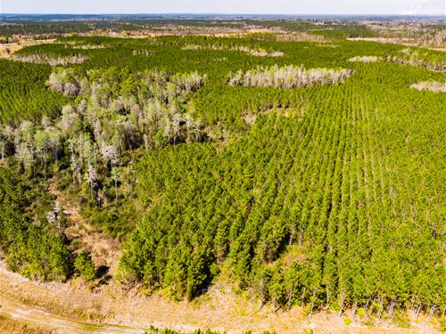 Prime Timber Investment & Hunting : Greenville : Madison County : Florida