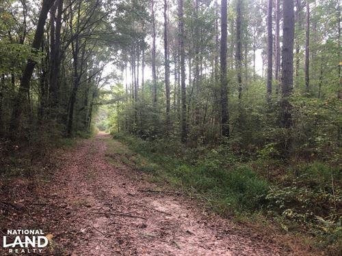 Lappatubby Creek Limb Hanger Proper : New Albany : Union County : Mississippi
