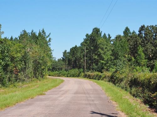 Sw MS 34 Acres Hunting Property : Ruth : Pike County : Mississippi