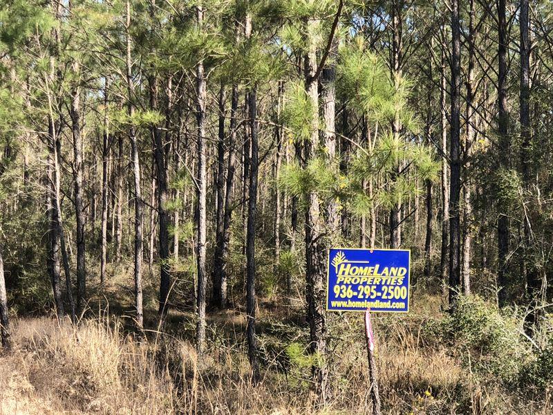 27 Acres Cr 62 : Jasper : Jasper County : Texas