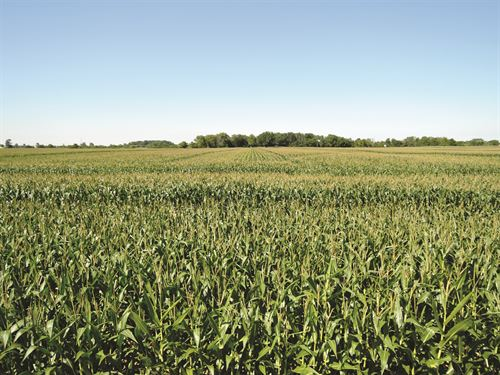 Important Land Auction In Indiana : Muncie : Delaware County : Indiana