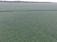 Very Fertile Precision Leveled Farm : Tuckerman : Jackson County : Arkansas