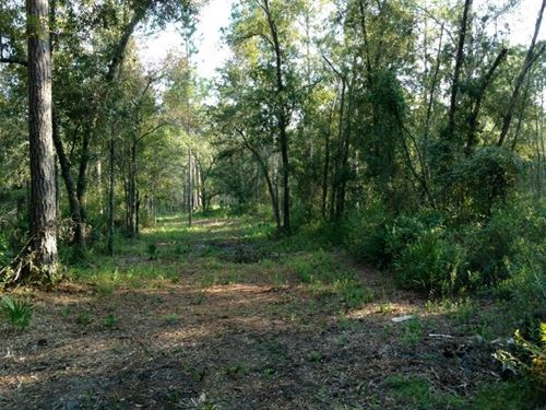 20 Acre Parcel Just 10 Minutes From : Lake City : Columbia County : Florida