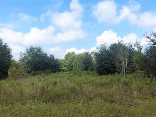 Very Nice 5 Acre Corner Lot Paved : Lake City : Suwannee County : Florida