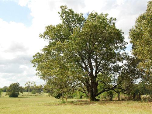 Van Zandt County Texas Land Edom : Ben Wheeler : Van Zandt County : Texas