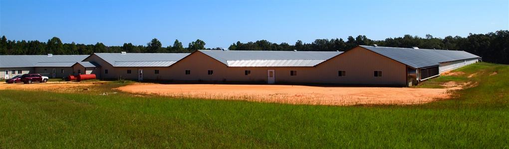 4 House Poultry Breeder Farm : Williston : Barnwell County : South Carolina