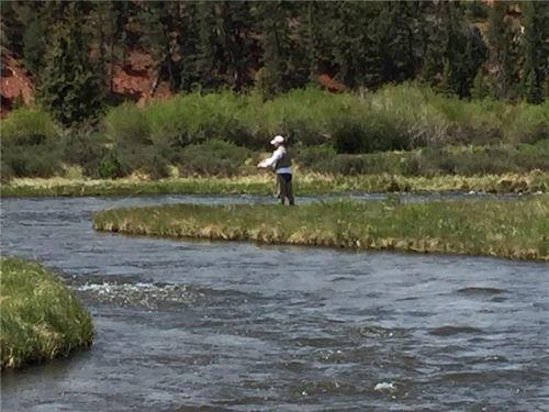 Fairplay Colorado Redhill Forest : Fairplay : Park County : Colorado