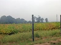 Sc Riverfront Farm : Jefferson : Chesterfield County : South Carolina