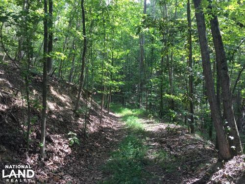 Timberland Investment, Hunting : Kingston : Roane County : Tennessee