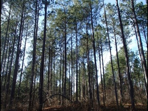 110 Acres In Noxubee County In Maco : Macon : Noxubee County : Mississippi