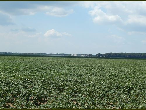 87 Acres In Yazoo County In Yazoo : Yazoo City : Yazoo County : Mississippi