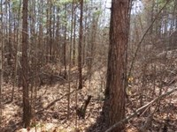 Graham Tract With Spring Feed Creek : Heflin : Cleburne County : Alabama