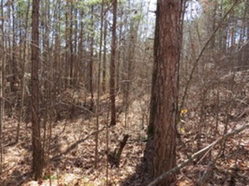Graham Tract With Spring Feed Creek : Heflin : Cleburne County : Alabama