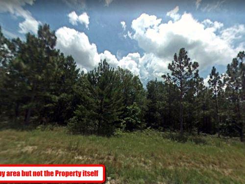 Amazing 2.1 Acre Lot In Hamilton Fl : Jennings : Hamilton County : Florida