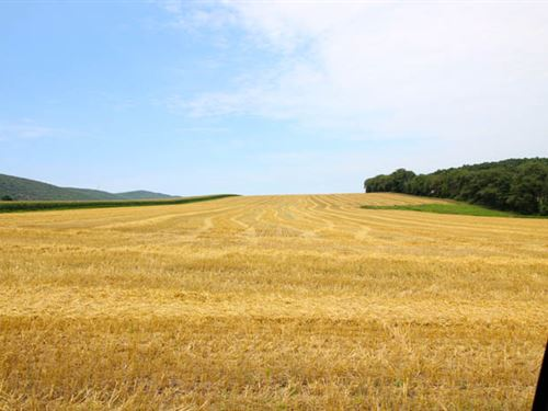 35 +/- Acres Land In Mifflinville : Mifflinville : Columbia County : Pennsylvania