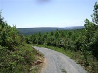 Bear Pen Tract : Whitwell : Marion County : Tennessee