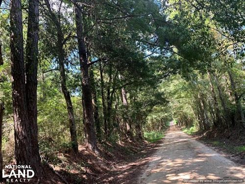 Lena Timber Investment And Hunting : Lena : Leake County : Mississippi