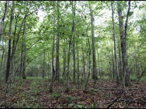 15 Acres In Attala County In Kosciu : Kosciusko : Attala County : Mississippi