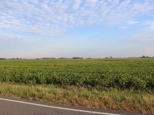 Highly Tillable Farm Land Auction : Holland : Pemiscot County : Missouri