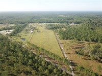 2.5 Acres, Forest Trail : Jacksonville : Duval County : Florida
