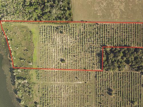 Waterfront Development Tract : Astatula : Lake County : Florida