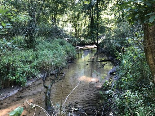 Creek, Woods & Hunting : Fennville : Allegan County : Michigan