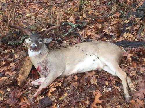 Heavily Wooded Recreational Huntin : Milburn : Johnston County : Oklahoma
