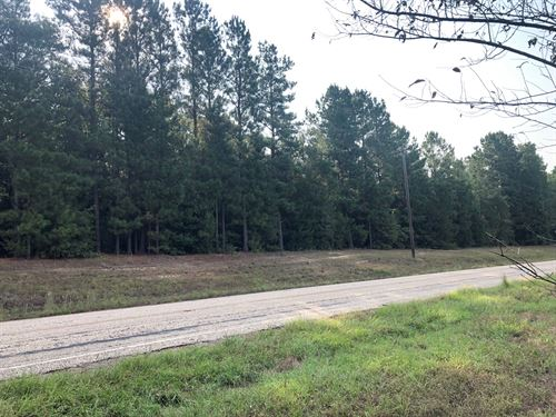 East Texas Home Site Timberland : Queen City : Cass County : Texas