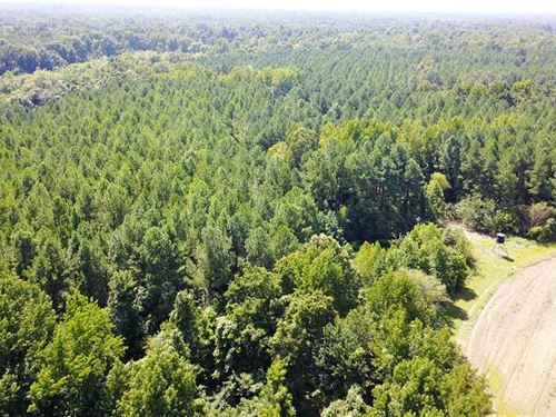 160 Acres Great Hunting And Timb : Newcastle : Saint Francis County : Arkansas