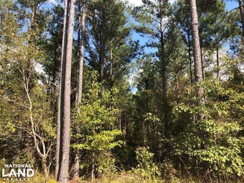 Paris, MS Small Acreage And Homesit : Oxford : Lafayette County : Mississippi
