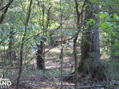 Creek Bottom Hunting Near Kelly, LA : Kelly : Caldwell Parish : Louisiana