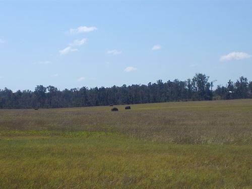 Shores Road Farm : Alford : Jackson County : Florida